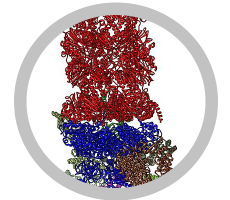 Picture of part of a Proteasome structure with a gray circle around it.