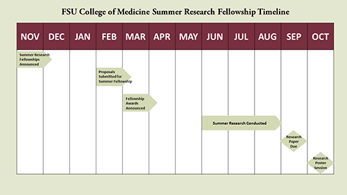 FSU CoM Summer Research Fellowship Timeline